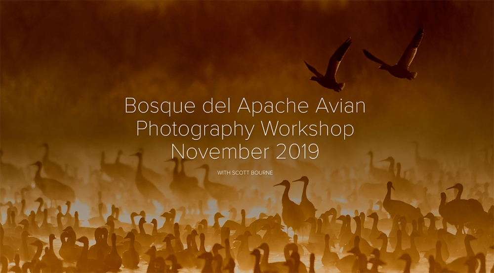 Bosque del Apache Photo Tour W/ Scott Bourne