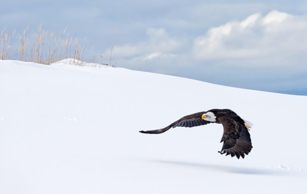 Bald Eagle Photograph by Scott Bourne